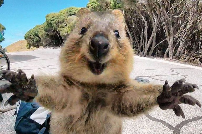 quokka-instagram-feature